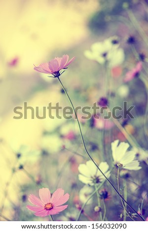 Beautiful defocus blur pastel background with tender flowers. Floral art design in retro style - stock photo