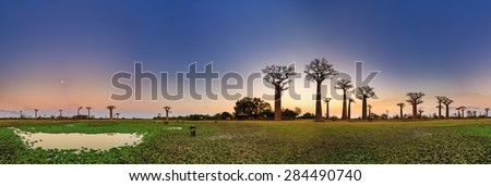 Beautiful 360 degree panorama after sunset at the avenue of the baobabs in Madagascar - stock photo