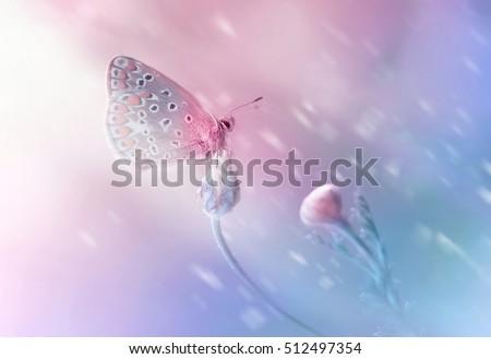 Blue Butterfly On Pink Flower