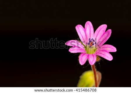 beautiful delicate flower on a black background - stock photo