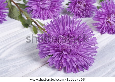 beautiful delicate flowers asters on the table - stock photo