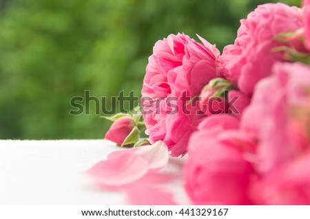 Beautiful, delicate, pink roses and rose petals on a green background, a beautiful background for cards, place for text