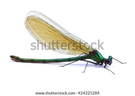 Beautiful demoiselle (Calopteryx virgo) isolated on white background - stock photo