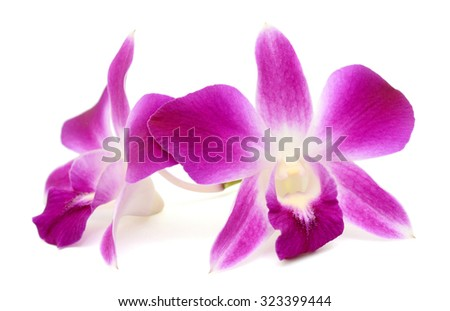 beautiful Dendrobium orchids flowers isolated on white background