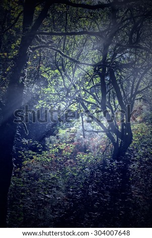 Beautiful dense forest from the north of Portugal. Used some digital filters. - stock photo