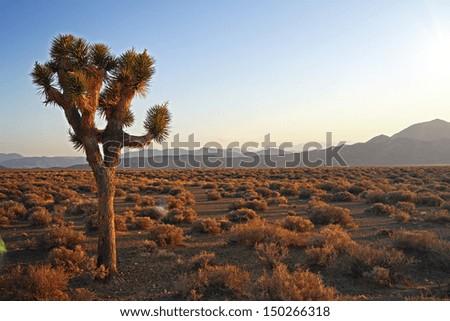 beautiful desert at sunset with three - stock photo