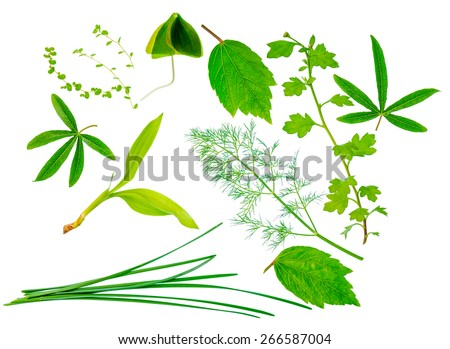 beautiful different exotic green leaves is isolated on white background, closeup   - stock photo
