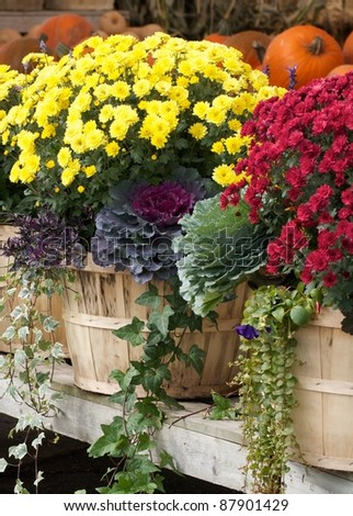 Beautiful display of autumn flowers in bushel baskets at an outdoor farmers market. Vertical format.