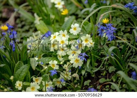 Beautiful display spring flowers english country stock photo edit beautiful display of spring flowers in an english country verge nature at its brightest mightylinksfo