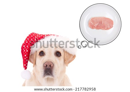 beautiful dog (golden retriever) in santa hat dreaming about food isolated on white background - stock photo