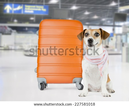 Beautiful dog in a stylish scarf waits at the airport. Sitting near the orange suitcase - stock photo