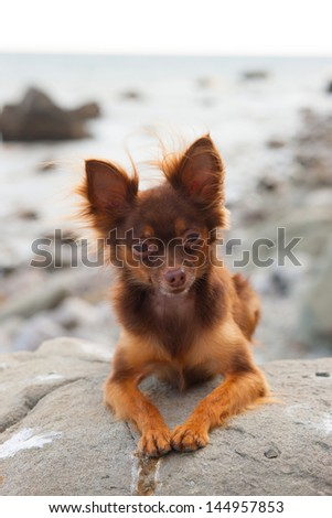 Beautiful dog on stone
