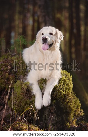 Beautiful dog posing in the forest - stock photo
