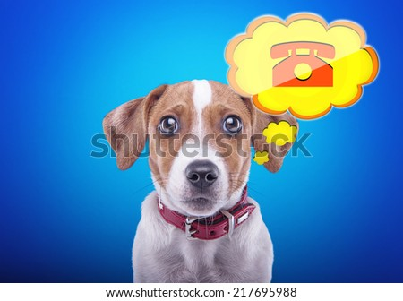 Beautiful dog with a blue background. Funny animals. Icon contact phone number - stock photo