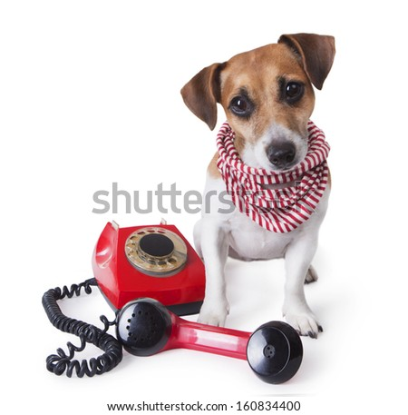 Beautiful dog with a stylish striped scarf sitting next to red retro telephone and looking at the camers. Studio shot. white background.Call center - stock photo