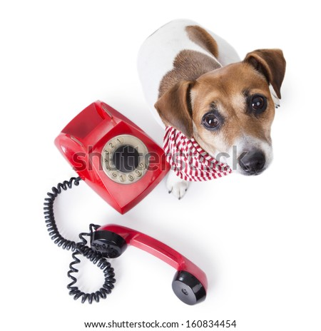 Beautiful dog with a stylish striped scarf sitting next to red retro telephone. Studio shot. white background. looking up to bottom. Call center - stock photo