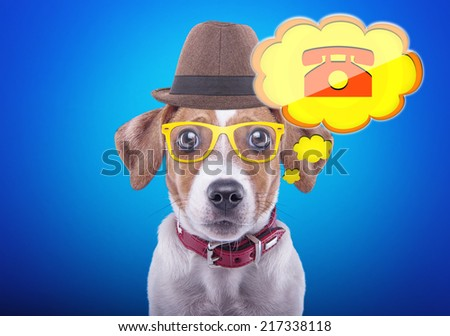 Beautiful dog with glasses and a hat on a blue background. Funny animals. Hipster dog. Icon contact phone number - stock photo