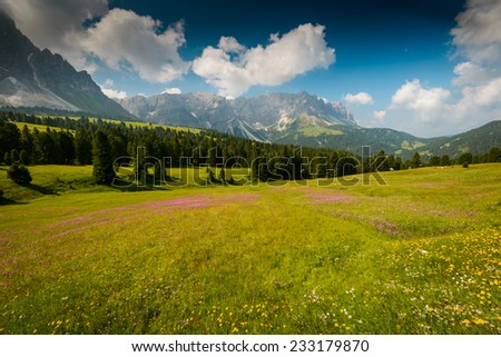 Beautiful Dolomites Alps landscape with flowering field in foreground. - stock photo