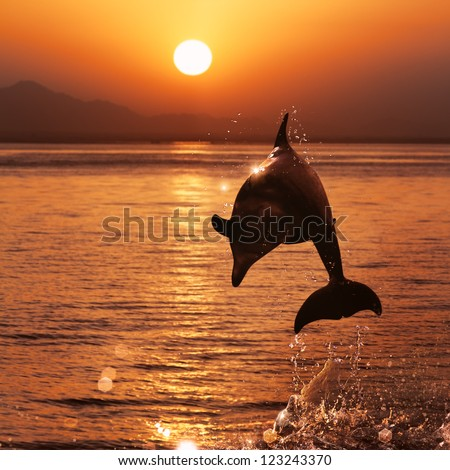 beautiful dolphin jumped from watrer at the sunset time - stock photo