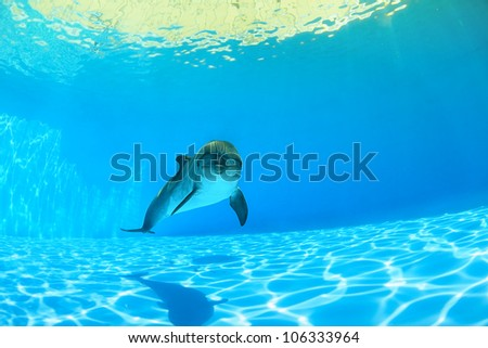 Beautiful dolphin under the azure water - stock photo