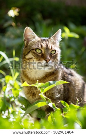 Beautiful domestic cat on sunny day in grass
