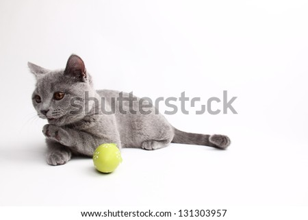 Beautiful domestic gray or blue British short hair cat/Funny young kitten playing with colored Easter eggs