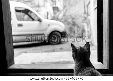 beautiful domestic grey sweet cat sitting at home and looking through window at car - stock photo
