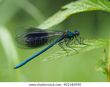 beautiful dragonfly in the forest - stock photo