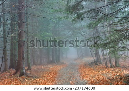 Beautiful dreamy conifer forest - stock photo
