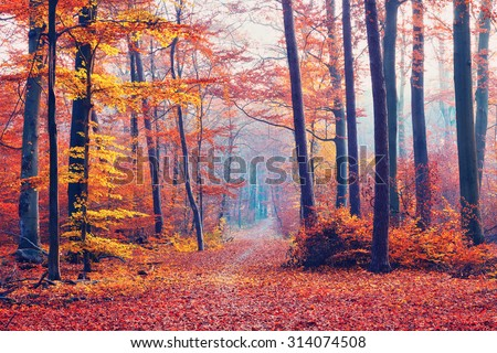 Beautiful dreamy forest at autumn - stock photo