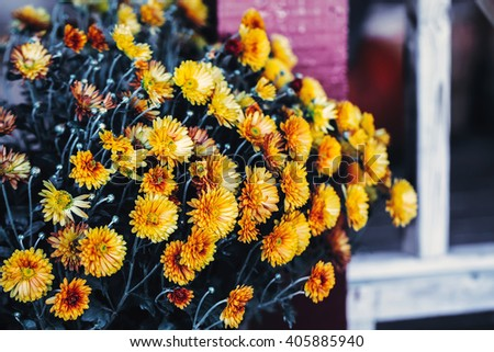 Beautiful dreamy magic yellow calendula flowers with dark green leaves, toned with instagram filters in retro vintage style effect, soft selective focus, copyspace for text - stock photo