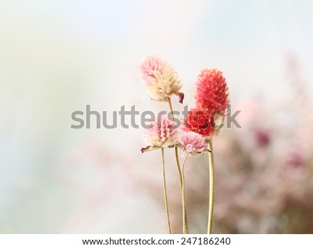 Beautiful dried flowers on bright background - stock photo