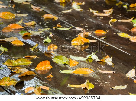 beautiful  dried leave on wet wooden floor background after raining