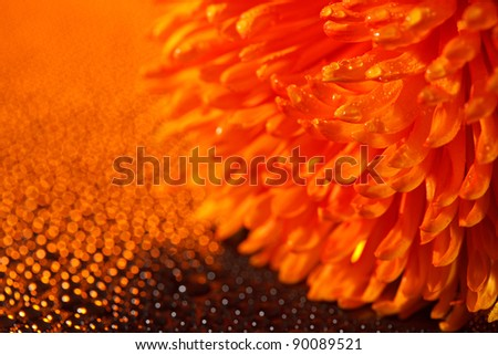 Beautiful drops of water close to the orange flower