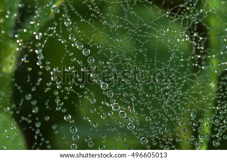 Beautiful drops of water dripping on the web