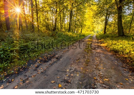 Beautiful early autumn european forest landscape. Morning forest illuminated by sunlight.