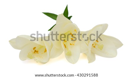 beautiful easter lily flowers isolated on white background