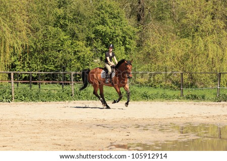 beautiful equestrienne on brown horse in summer - stock photo