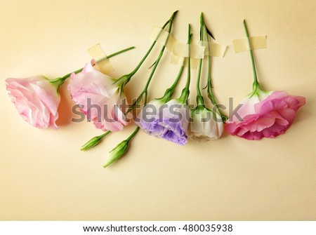 Beautiful eustoma flowers in a row on beige background