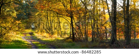 Beautiful evening sun falls through the trees on a forest path - stock photo