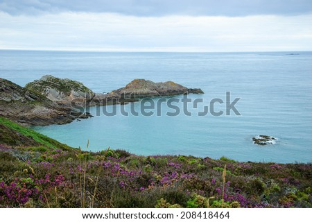 Beautiful evening view from Cap Erquy cliffs covered with  violet heather flowers on a sea bay. Brittany, France. - stock photo
