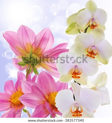 Beautiful exotic flower orchid on abstract nature background - stock photo