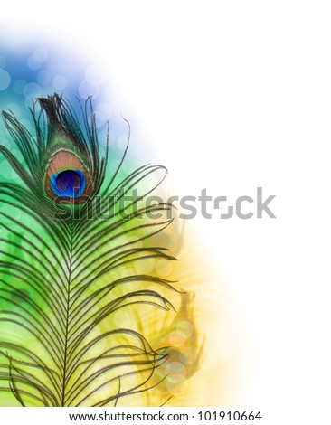 Beautiful exotic peacock feather - stock photo