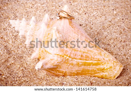 Beautiful exotic shell with golden wedding rings - stock photo