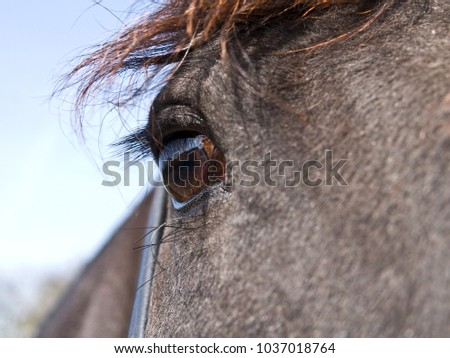 Beautiful eye of a Friesian horse - look inside his soul.