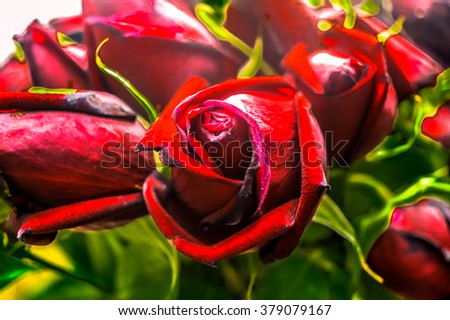 Beautiful faded red roses
