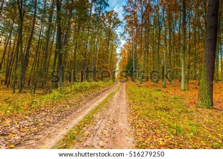 Beautiful fall forest photographed at sunny day. European autumnal forest landscape.