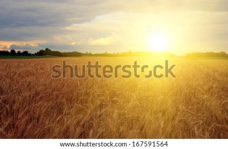 Beautiful farmland in sunset - stock photo