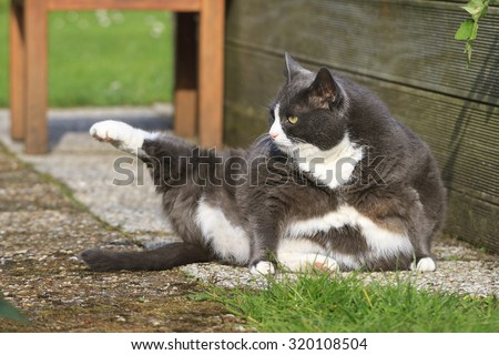 yoga cat stock photos images  pictures  shutterstock
