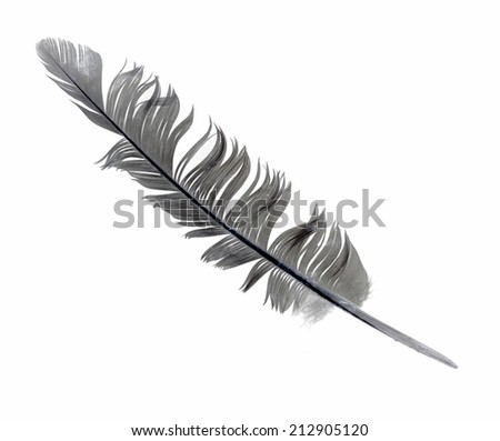 Beautiful  feather , isolated on white